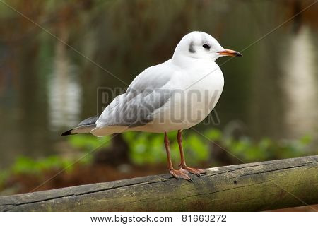 Bird av