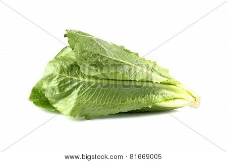 Cos Lettuce, Romaine Lettuce Isolated On White Background