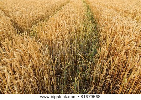 Multiple Tracks Grain Field