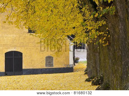 Close up on autumn leaves, trunks and a yellow building.