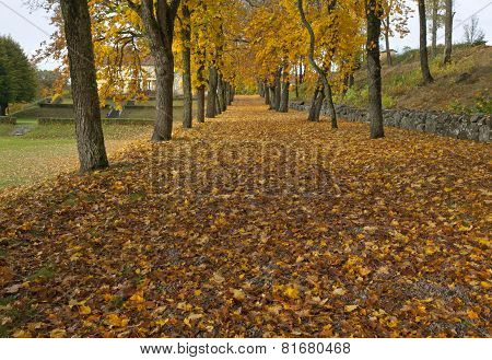Close up on autumn leaves, chestnut trunk and a parkway.