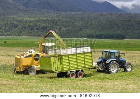 Harvesting Triticale For Silage