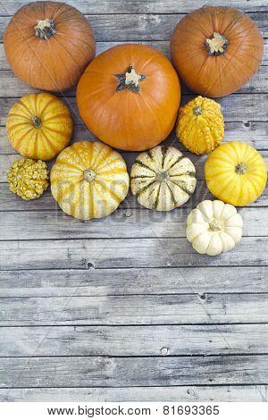 Orange and yellow pumpkins