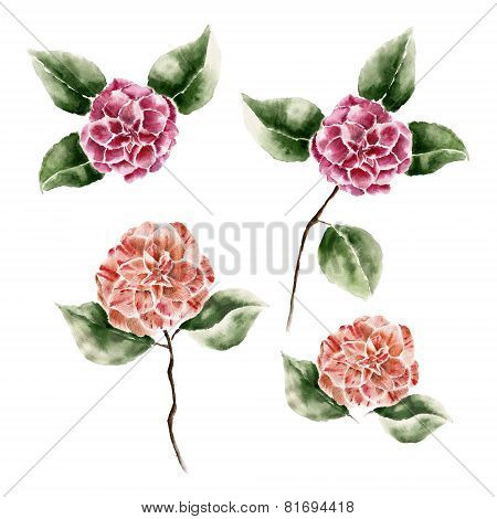 Background with camelia flowers. Watercolor illustration