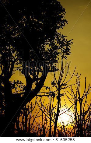 Silhouette Trees With Sunset