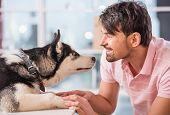 image of happy dog  - Close - JPG