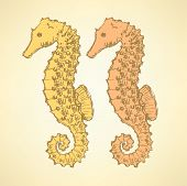 picture of seahorse  - Sketch cute seahorse in vintage style vector - JPG