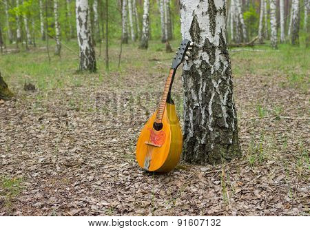 Mandolin lost in a birch forest