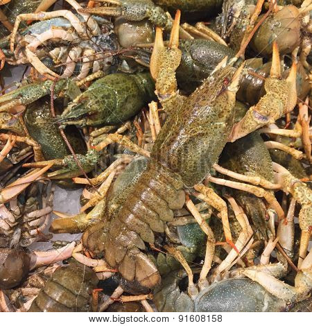 Heap Of Live Crayfish At Market As Background