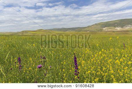 Spring In The Mountains Gobustan.azerbaijan
