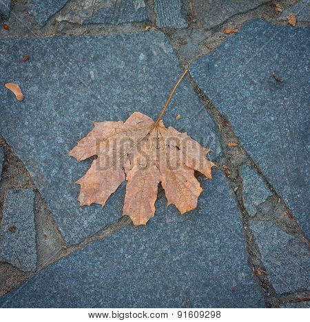 Lone Leaf On The Pavement