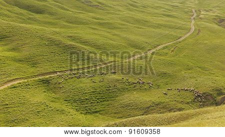 A Shepherd Tending A Flock Of Sheep In The Mountains Of Gobustan(azerbaijan)