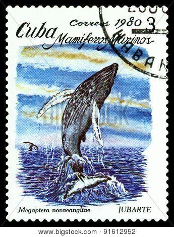 Vintage  Postage Stamp. Megaptera Novaeangliae.