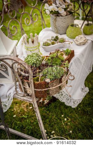 Garden decoration with wildflowers and succulents in shabby chic style