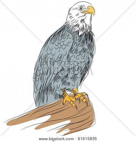 An image of a bald eagle.