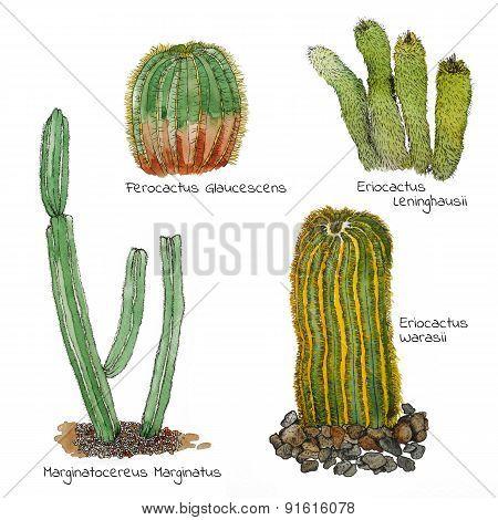 Cacti watercolor sketch set