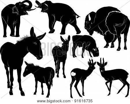 Collection of silhouettes of mammals animals