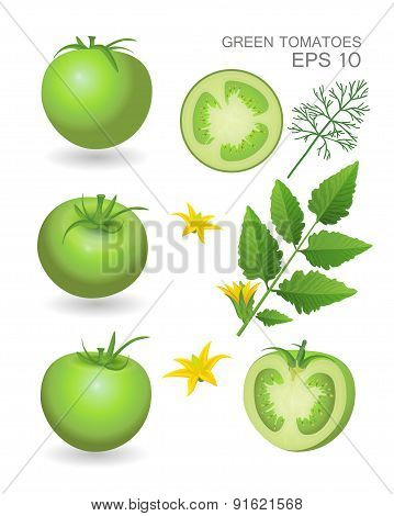 Green fresh realistic tomatoes with leaves blossom and dill