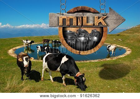 Milk - Wooden Sign With Grazing Cows