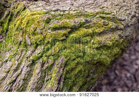 Tree with moss in the forest