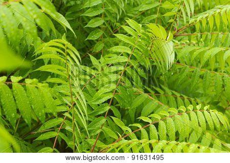 Fresh green flora