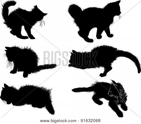 illustration with cat collection isolated on white