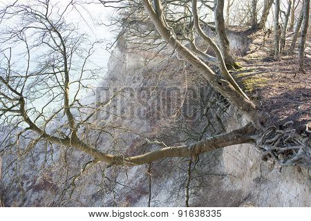 Tree Hanging Off A Cliff