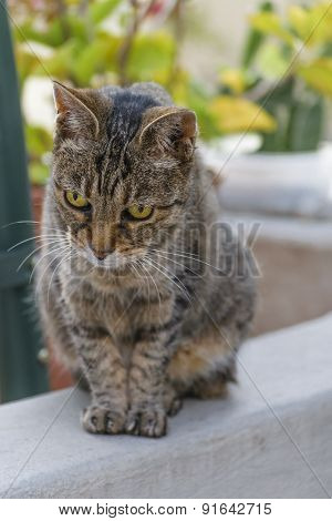 Cute Cat Watching Outside Camera