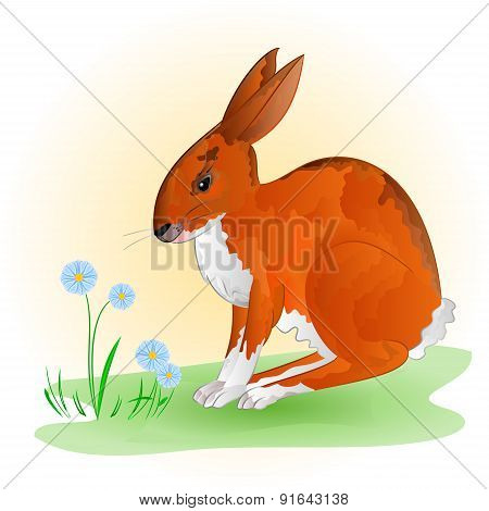 Cheerful Spring Bunny Vector