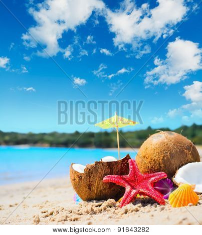 Coconuts And Starfish By The Shore