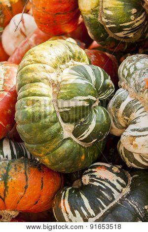 Bischofsmütze Turk Turban Cucurbita Pumpkin Pumpkins From Autumn Harvest