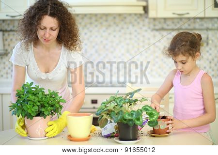 Mother and daughter transplant houseplants in the kitchen