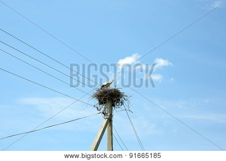 Young stork in wicker nest over blue sky background