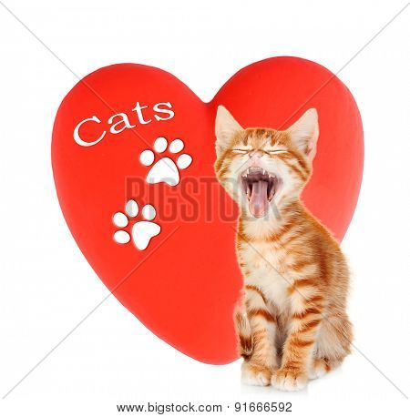 Cute kitten on red heart background isolated on white