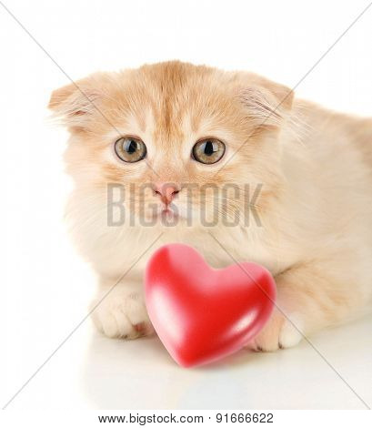 Cute kitten and small red heart isolated on white