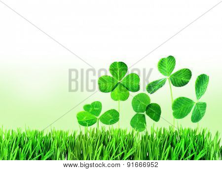 Clover leaves in grass on light background