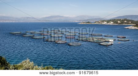 Fish breeding with tanks directly into the sea