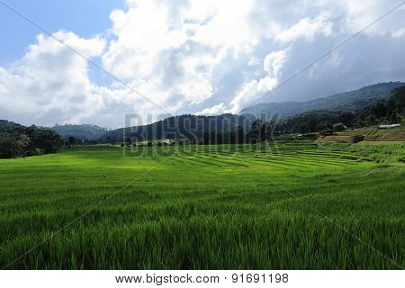 Terrace Green Rice Fields