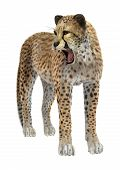 foto of cheetah  - 3D digital render of a big cat cheetah isolated on white background - JPG