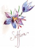 stock photo of saffron  - Watercolor flowers of saffron - JPG