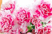 picture of carnation  - Photo of the red carnations in bouquet - JPG