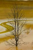foto of polution  - dry tree in poluted water lake red colour - JPG