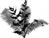 stock photo of fern  - illustration with fern bush silhouettes isolated on white - JPG