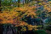 foto of glorious  - A walk in the park among maple trees in glorious autumn - JPG