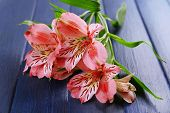 stock photo of jonquils  - Beautiful alstroemeria on wooden background - JPG