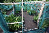 picture of sudan  - Tree nursery in a demonstration farm in Morobo County - JPG