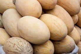 picture of cucurbitaceous  - Melon or Cucumis melo plant family Cucurbitaceae cucurbitaceous culture - JPG
