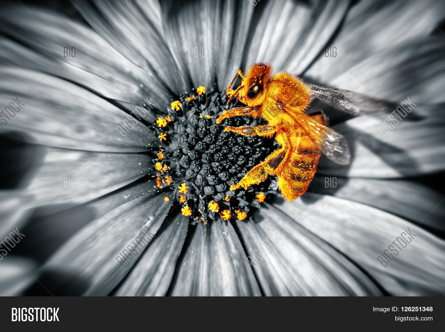 Close Up Photo Of A Cute Little Yellow Bee Sitting On Daisies Flower