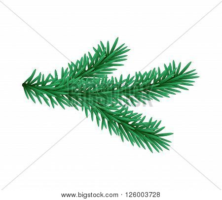 Green lush spruce branch. Fir branches. Isolated illustration in vector format.