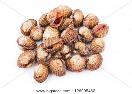 Overhead shot on heap of fresh and living cockles shells